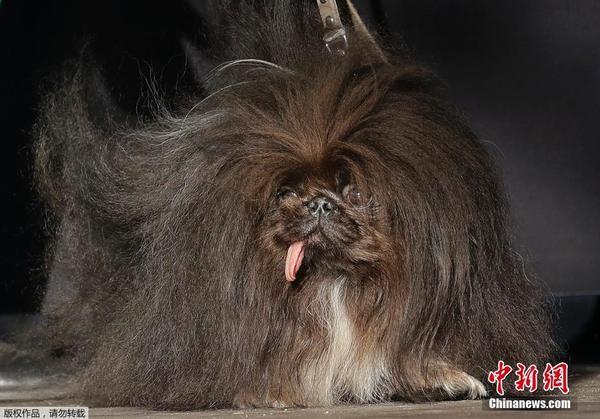 世界最丑狗狗 真的是丑出新高度