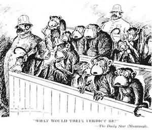 美国猴子案件是什么 案件的真正起因又是什么