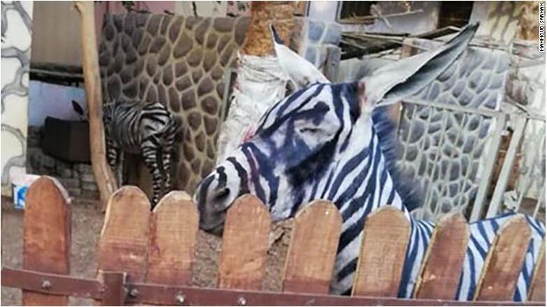 动物园画驴成斑马 这究竟是怎么回事 真是滑稽