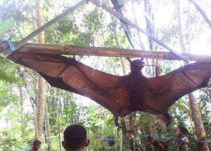 为什么人类本能的害怕蝙蝠和蛇 是天生的恐惧造成的吗