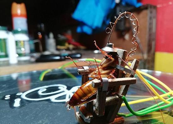 自制电椅处死蟑螂 真的是太变态了 这个属于虐待动物吗