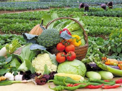 山东蔬菜价格上涨  山东蔬菜为什么价格上涨  详情介绍