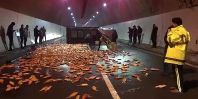 高速隧道万条锦鲤 是怎么回事 车辆为什么失控 详情介绍