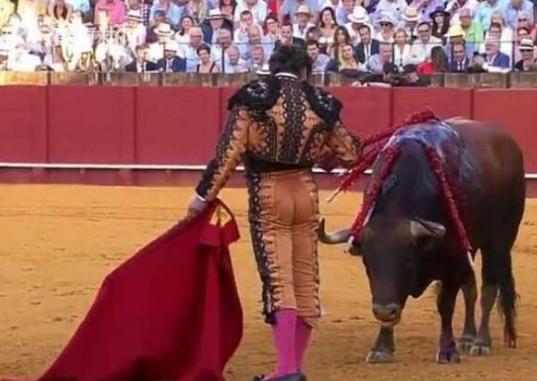 杀公牛前擦干血泪 这是怎么回事 结果引发巨大争议